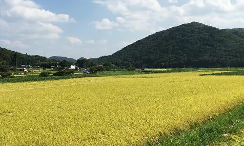 (株)丹波篠山 かまい農場